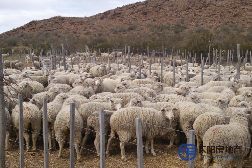典型的农场为了2000只牛