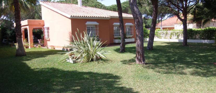 出售别墅有1000平方米的带有松树的花园离漂亮的海滩350米的距离