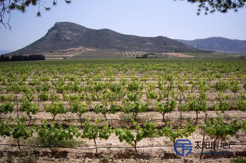 葡萄园酒庄和乡间小屋