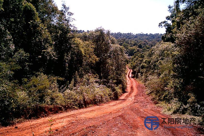 Atención inversores campos Forestal 22.000 Hectáreas