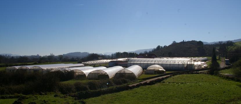 invernadero en produccción
