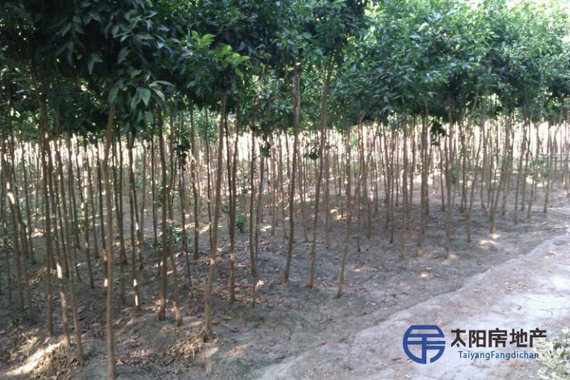Vivero de Producción de Arboles y Arbustos Ornamentales en pleno rendimiento