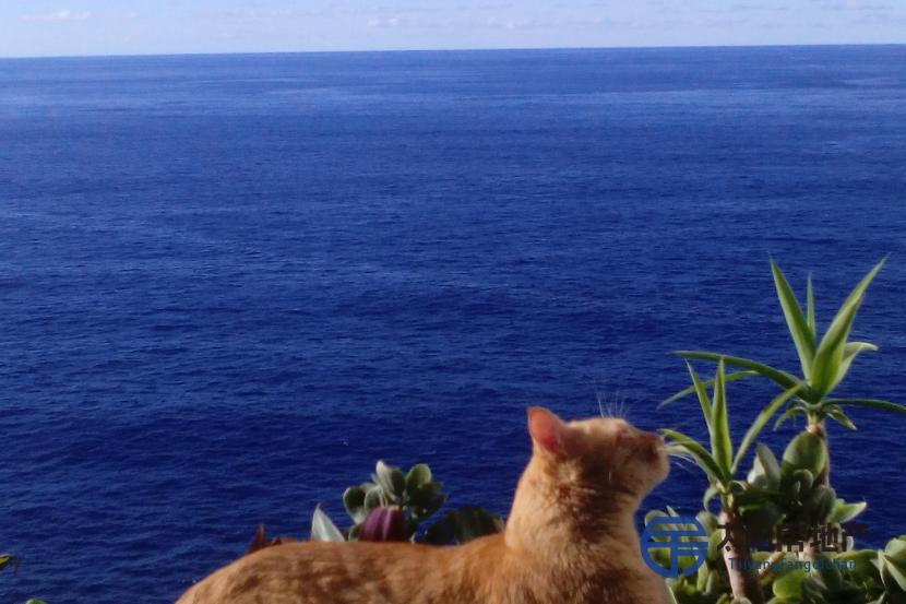Apartamento en Venta en Los Realejos (Santa Cruz de Tenerife)