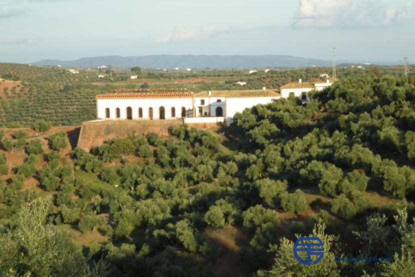 有6600棵橄榄树的土地...