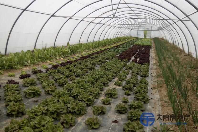 Invernaderos, explotación agraria con invernaderos, frutales, huerta, pabellón,...