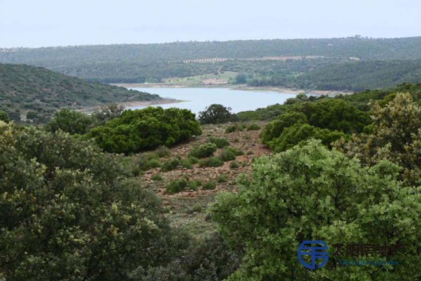 Finca de 1.500 Hectareas en Ciudad Real (Tierra, regadio y monte)