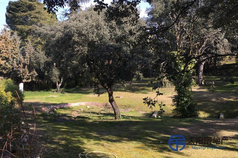 在La Moraleja高尔夫球场附近的地块