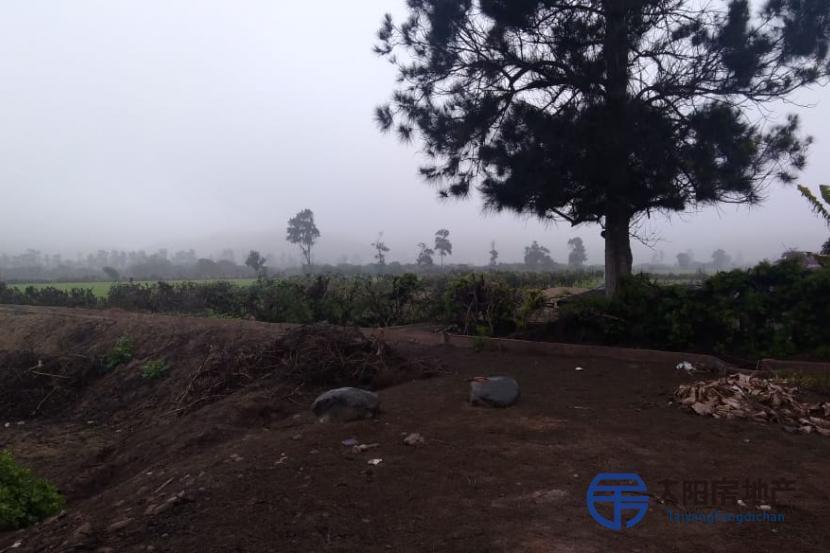 Terreno para Cultivo