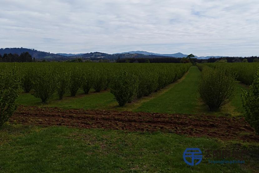 农业控股 果树农场