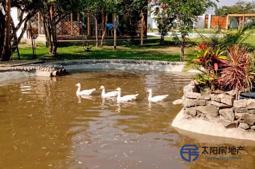 出售位于Huarangal (Lima)市外的独立房子