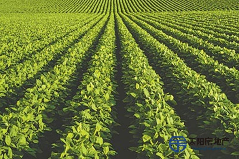 公顷的灌溉农场...