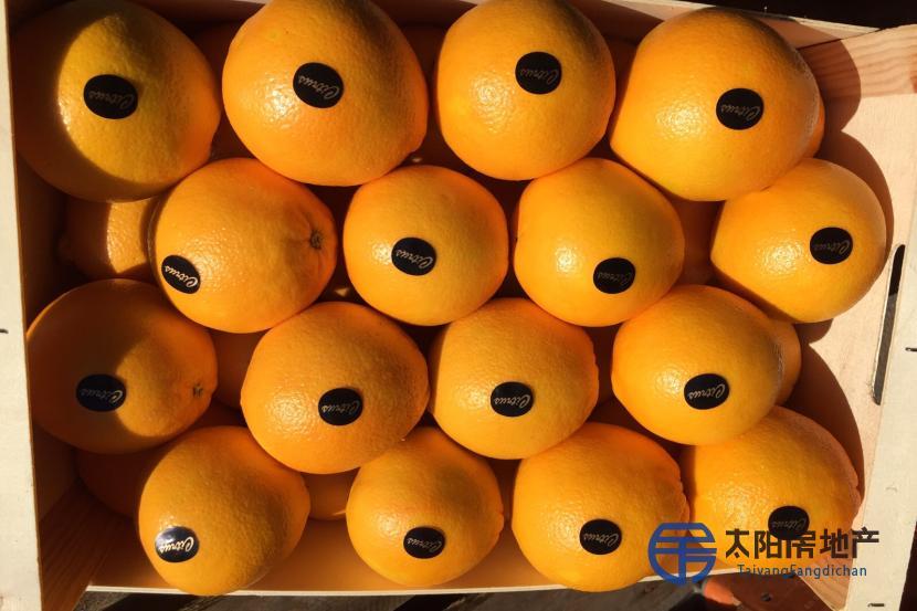 销售橙子和高品质的柑橘。